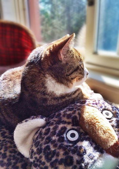 Good morning EyeEms, the Bellingham Squirrel & Bird Watchers Society is on the job, bringing you accurate counts of the aforementioned critters. All present & accounted for this Thurs morn. 1, 2, 3, 4.... 12, 12ty3, ... Mel&BomBi Cat Tadaa Community Tadaa Kitties