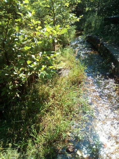 Fluss Water