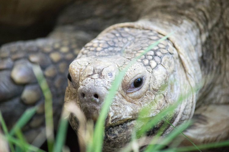 Close-Up Of Tortoise Outdoors