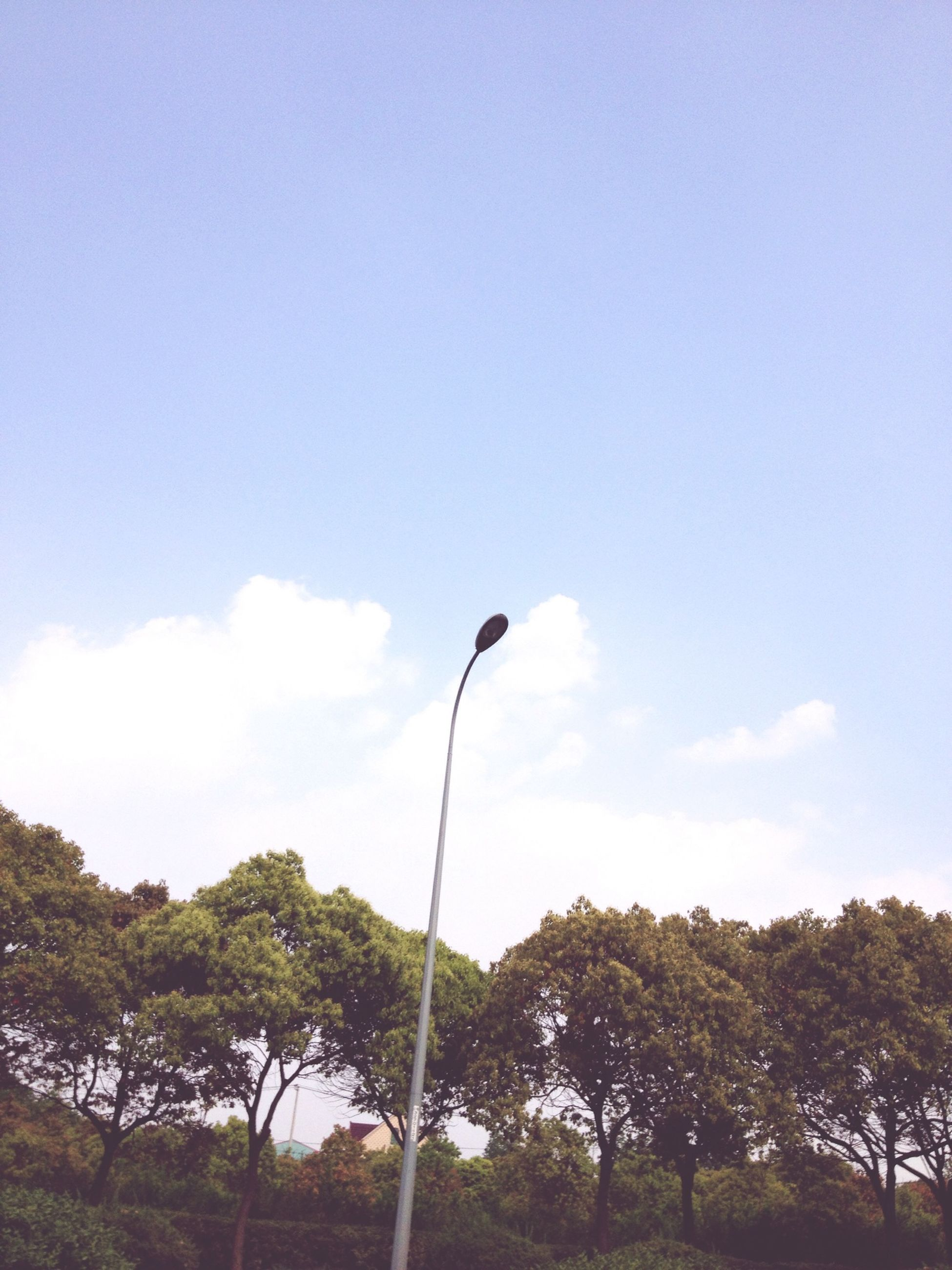 low angle view, tree, sky, street light, nature, cloud - sky, cloud, blue, tranquility, growth, pole, beauty in nature, lighting equipment, day, outdoors, tranquil scene, no people, copy space, scenics, lamp post