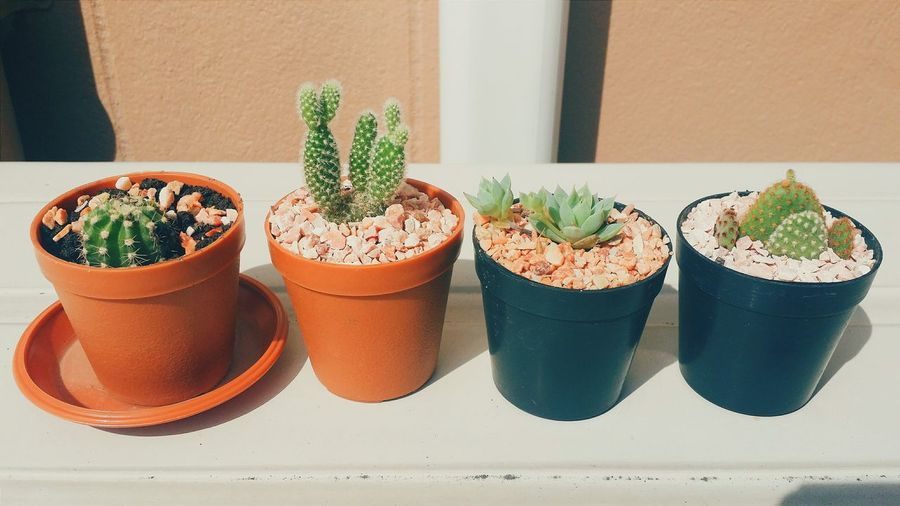Cactus Taking Photos Relaxing Happiness Open Edit The 2014 EyeEm Festival & Awards Memories Enjoying Life Plant Nature