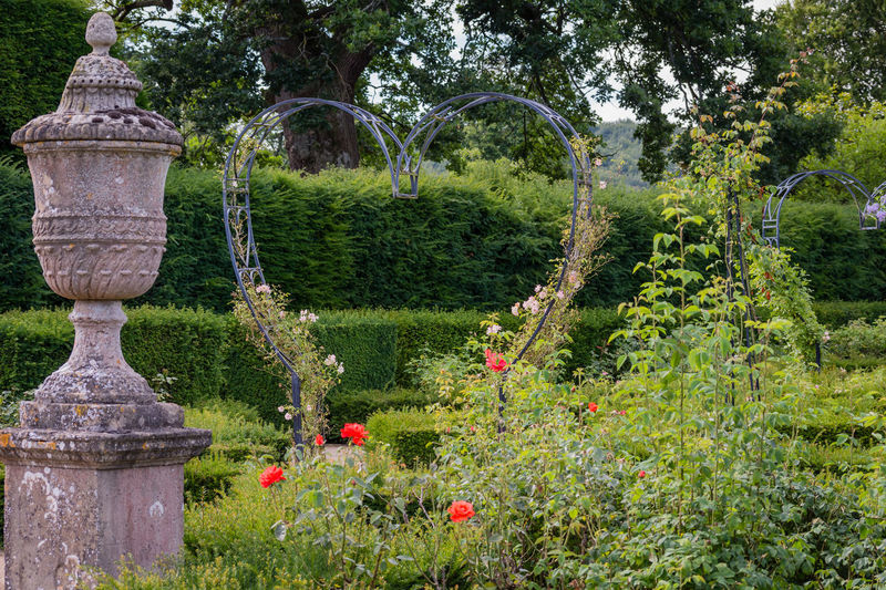 View of plants in garden