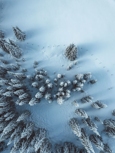 Aerial view of trees on snow covered landscape