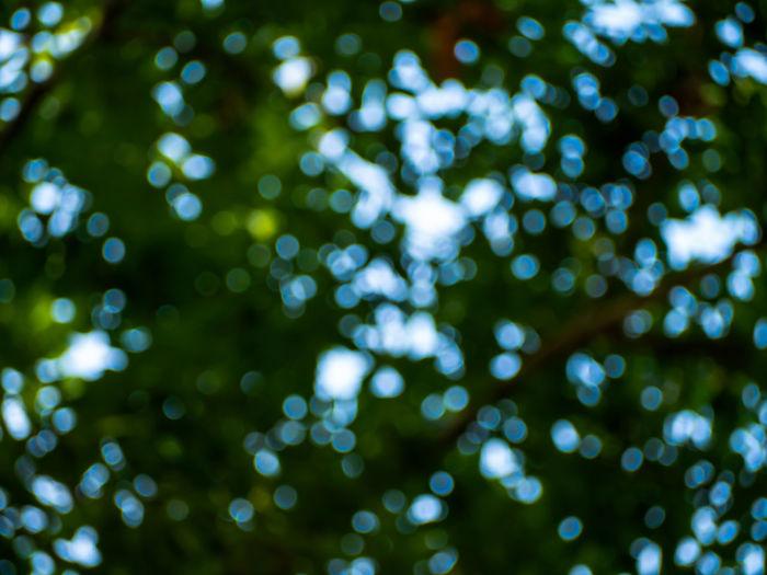 Defocused image of trees