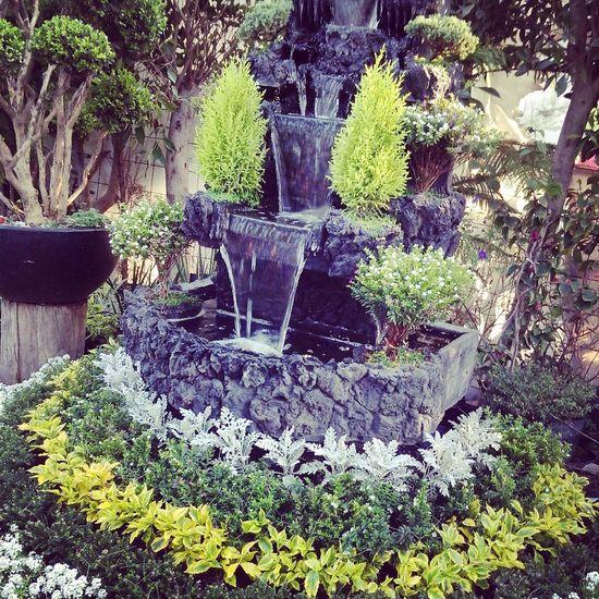Flowers :) Xochimilco Mexico City
