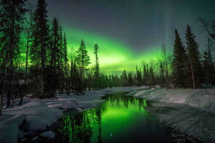 Scenic view of snow covered forest against sky at night
