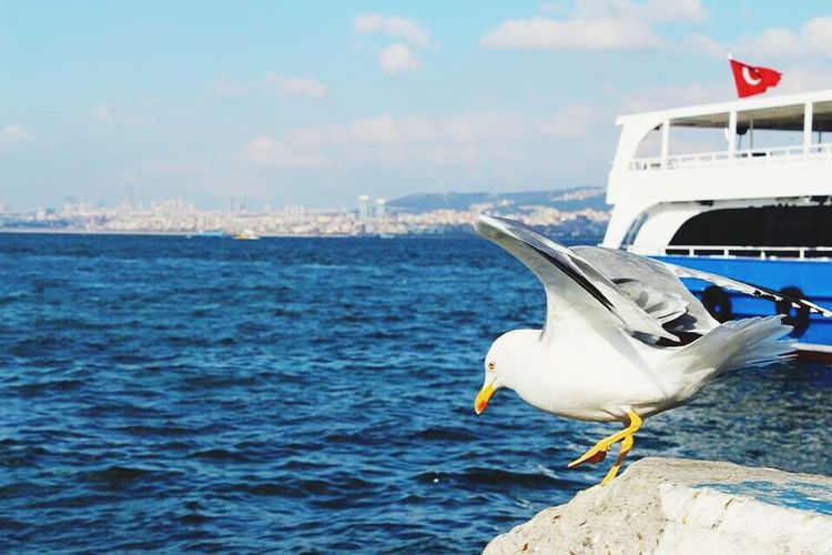 Photography Photo Photographer Sea Seagull Followme Followforfollow Instagood Instalike Prinkipos Büyükada Martı Istanbul Istanbul Turkey Istanbuldayasam