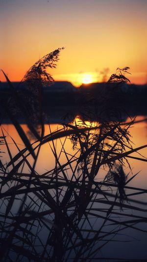 Sunset Water