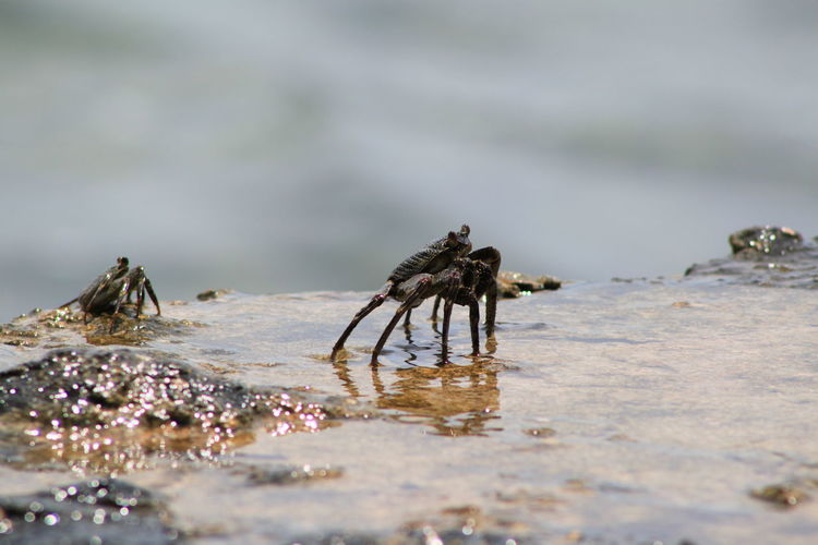 Crabs on wet rock