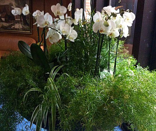 Beliebte Fotos I Love Flovers Nature Flowers