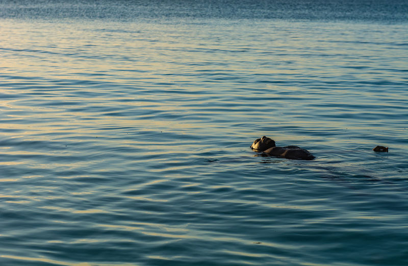 Young adult swimming in ocean