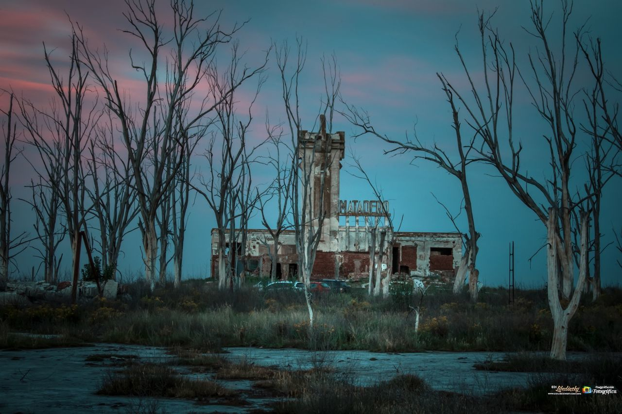 abandoned, sky, bare tree, tree, no people, damaged, desolate, old ruin, landscape, architecture, outdoors, built structure, nature, grass, building exterior, day