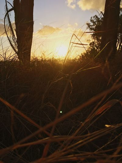 EyeEmNewHere Fromthegrass Sun Sunset_collection Growth Outdoors Mother Nature Nature Grass Close-up Beauty In Nature Tranquility First Eyeem Photo Landscape Sky