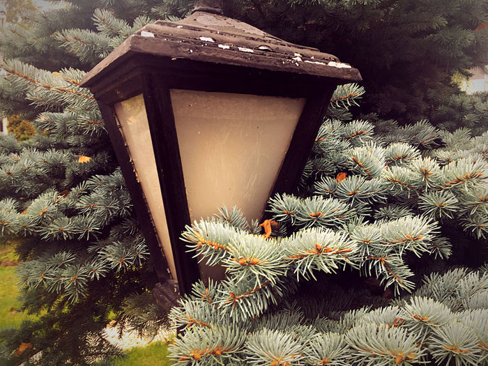 Close-up of birdhouse on tree against wall
