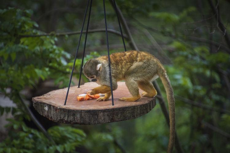 Monkey eating food on tree