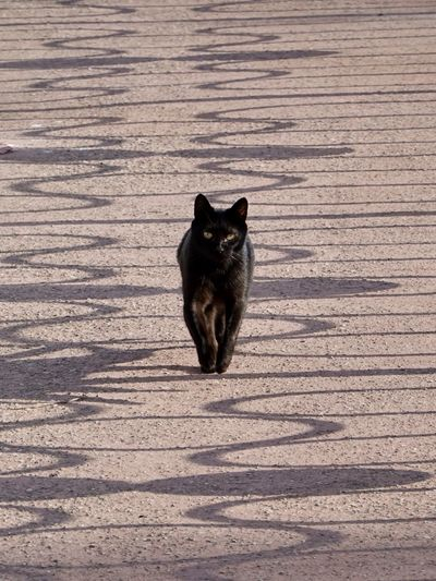 Portrait of black cat sitting on brick wall