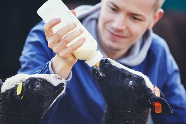 Smiling Mid Adult Man Feeding Milk To Lambs
