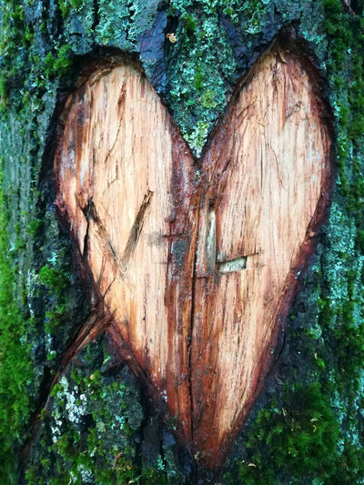 dav Love Love In Forest Heart Shape Positive Emotion Emotion Tree Plant Tree Trunk Trunk Romance Close-up Nature Valentine's Day - Holiday Day Outdoors Textured  Bark