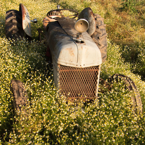 Abandoned tractor resting in field of wild flowers in Willamette Valley Oregon. Farm Overgrown Rust Tractor Abandoned Agriculture Farm Equipment Field Grass Growth Land Nature No People Overgrown And Beautiful Plant Rural Scene Rusty Weed Weeds Wild Flowers
