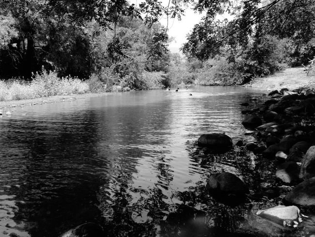 Hello World Relaxing Black & White Water Reflections