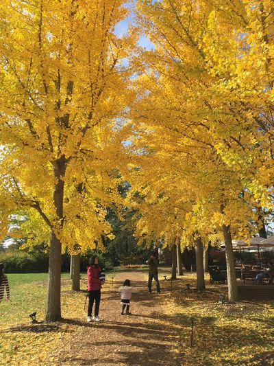 Trees LongwoodGardens Path Walking Autumn Tree Real People Leaf Change Yellow Color Yellow Leaves Outdoors Men Two People Leisure Activity Rear View Beauty In Nature Yellow Women Couple - Relationship Footpath Lifestyles Full Length Day