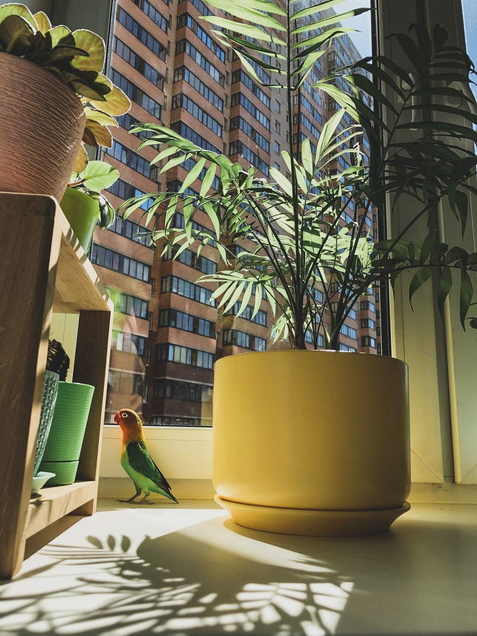 POTTED PLANTS ON TABLE IN WINDOW