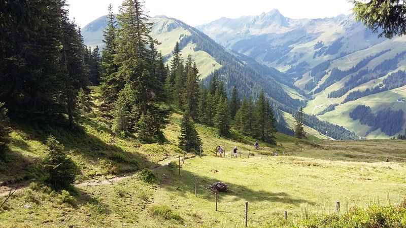 Mountain Tree Grass Green Color Nature Mountain Range Day OutdoorsGreen Color No Filter Lonely People Best Weather Sunshine ☀ Goodtime ❤️ Hiking Far Far Away Summer In The Mountains Getting Away From It All Saalbach Austria Footpath