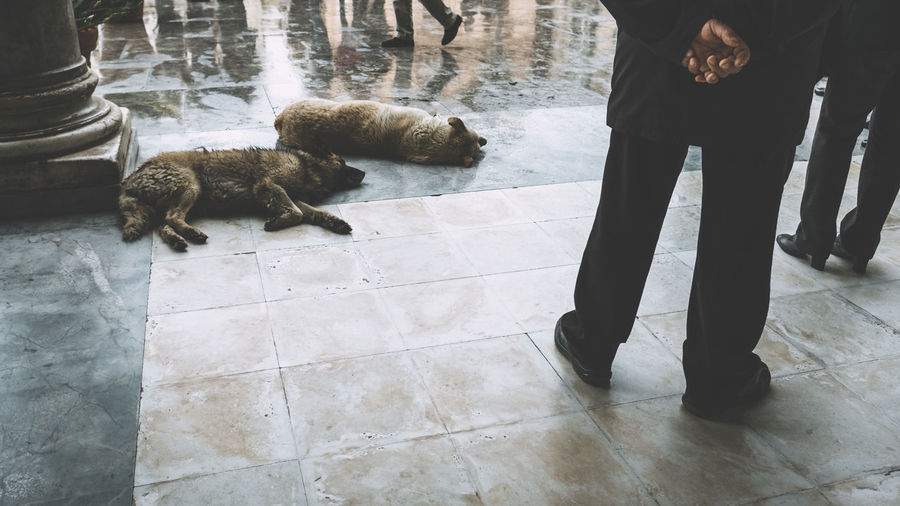 Dogs lying on ground