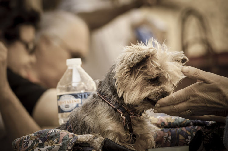 Cute Cute Dog  Dog Domestic Animals Hands Pet And Owner Pets Selective Focus