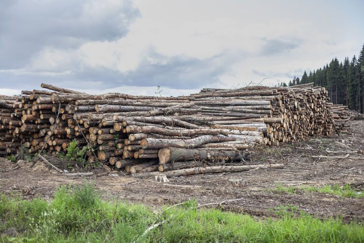 Stack of logs on field in forest against sky