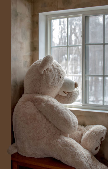 Large teddy bear looks out a window at the world outside