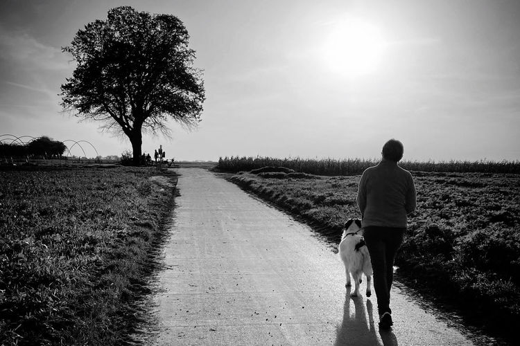 Rear view of person walking with dog on field