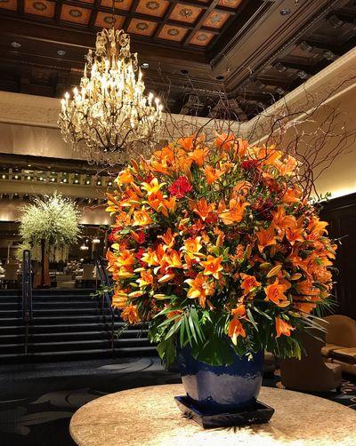 Juxtaposition Flower Blossom Flower Arrangements Colorful Indoors  Chandeliers