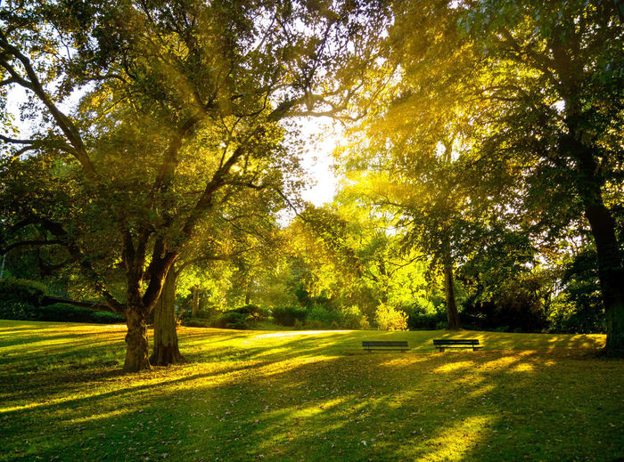 Backlight Beauty In Nature Day Environment Grass Green Color Idyllic Land Landscape Nature No People Outdoors Park Park - Man Made Space Plant Scenics - Nature Shadow Sunlight Tranquil Scene Tranquility Tree Treelined