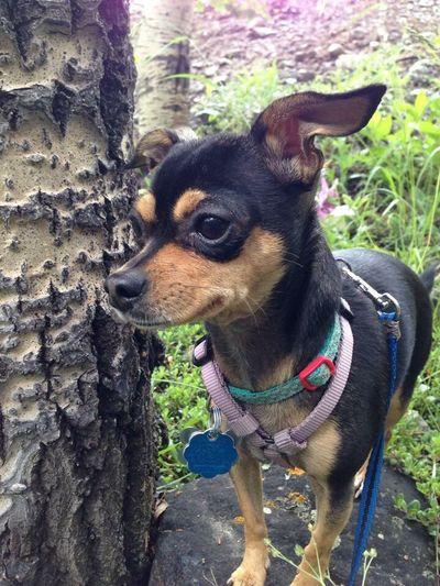On point Brave No Leash Little Girl Small Dog Adventurer Brown Eyes
