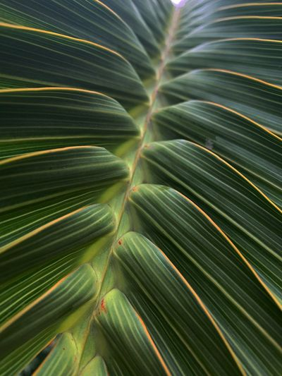Full frame shot of palm leaves