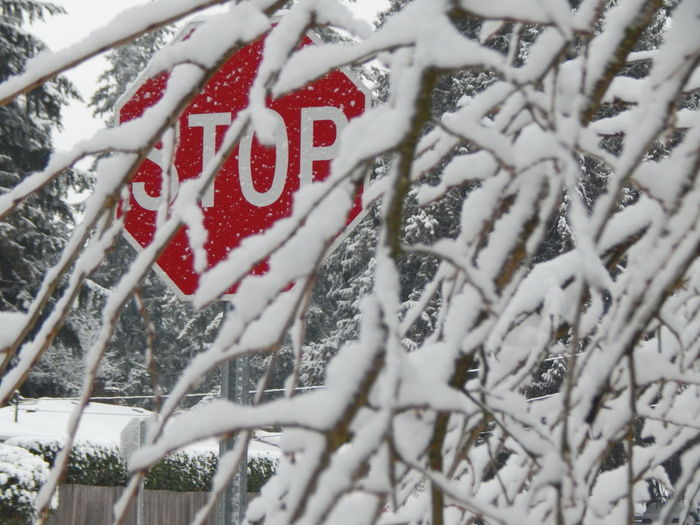 stop Bare Tree Branch Close-up Cold Temperature Communication Day Frozen Nature No Parking Sign No People Outdoors Red Road Sign Snow Stop Streetphotography Text Tree Weather Winter