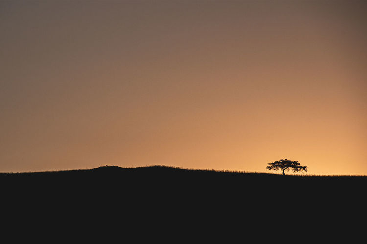 Silhouette plants on land against clear sky during sunset
