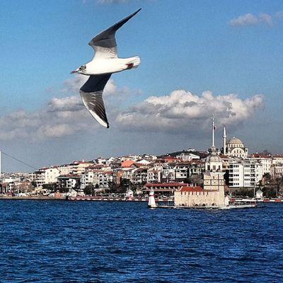 Allshotsturkey Instagram_turkey Istinstagram Hayatakarken aniyakala bendenbirkare 1kitap1fotograf hayattankareler