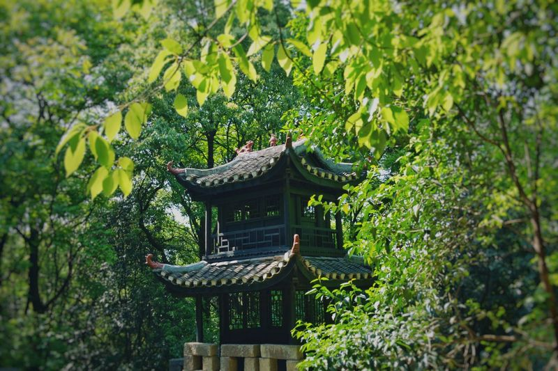 Sunny Day Nature Tree Architecture Traditional Architecture Green Green Leaves Outdoors No People Nikon D7100 Changsha, Hunan