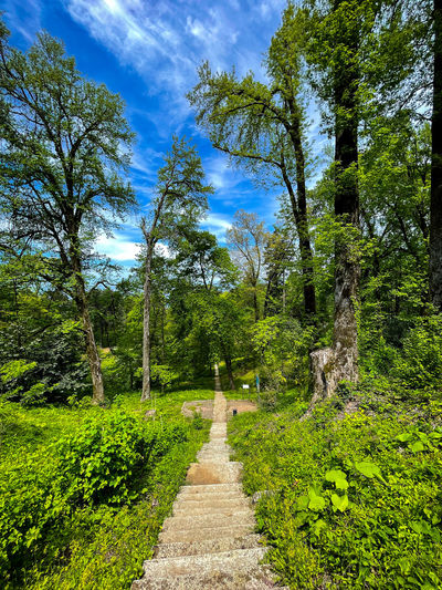 Footpath amidst trees in forest against sky