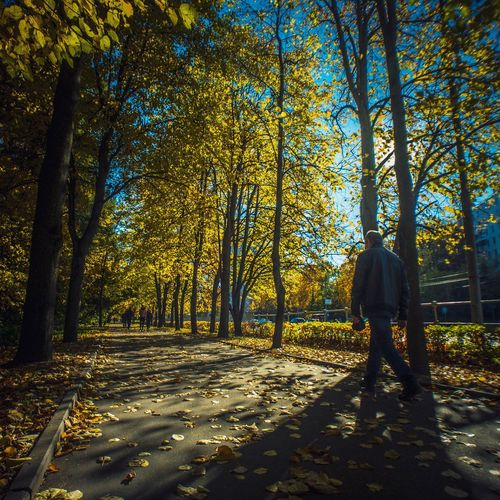 Autumn Sun Day. Aemz Yellow Wood Autumn Sunday Tree Real People One Person Plant Sunlight Full Length Nature Day Men Lifestyles This Is Natural Beauty