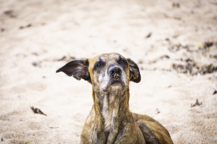 Land Nature Day Outdoors Beach One Animal Animal Themes Animal Mammal Vertebrate Domestic Domestic Animals Pets Portrait Dog Canine No People Looking At Camera Animal Body Part Animal Head  Close-up Herbivorous Dogslife Dogs