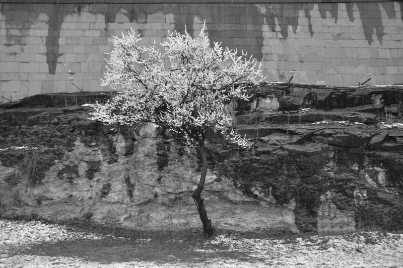 Trees and plants by wall of building