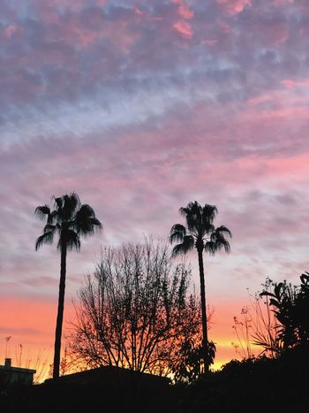 Rend Sky Sky Sunset Silhouette Cloud - Sky Tree Plant Beauty In Nature Nature Scenics - Nature Orange Color Outdoors Palm Tree
