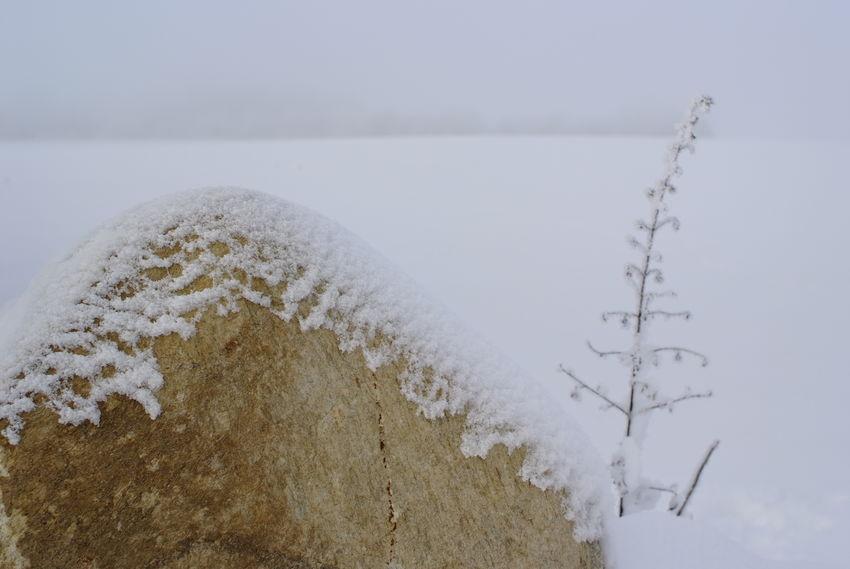 Ein schneebedeckter Findling/Felsblock hebt sich mit seiner kraeftig-gelben Farbe gegen die monochrome Schneelandschaft ab, rechts daneben in Kontrast dazu steht ein rauhreifueberzogener, zarter Grashalm. Foto (c) Kay-Christian Heine Hoarfrost Misty Nature Plant Beauty In Nature Boulder Close-up Cold Temperature Day Frozen Gloomy Minimalism Monochromatic Monochrome Nature Naturephotography No People Outdoors Season  Simplicity Snow Snowy Tranquility Winter Withered