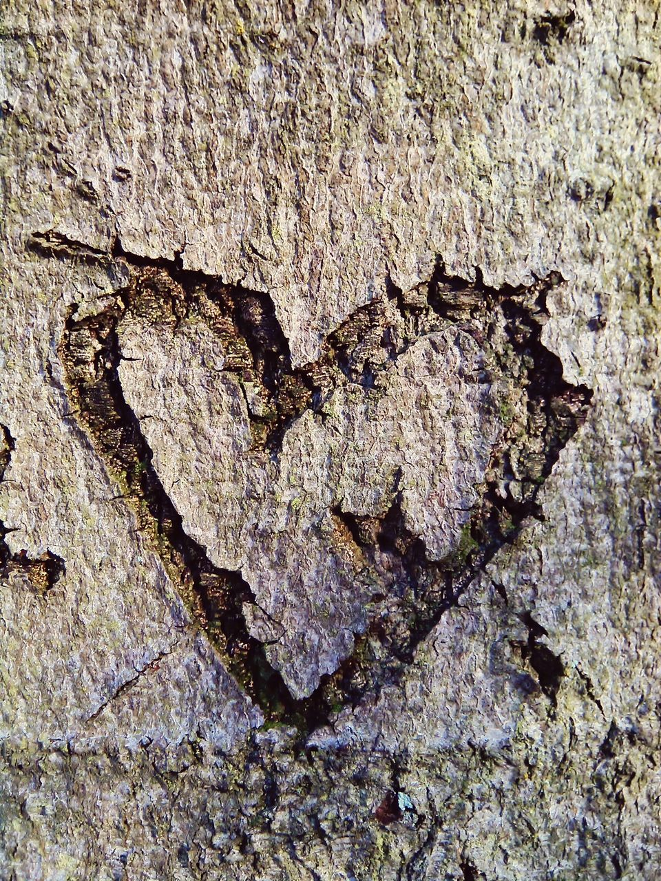 Heart Shape Carving On Tree Trunk