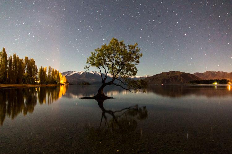 New Zealand Scenery Reflection Tree Wanaka Lake Lake Wanaka Landscape New Zealand Night Nightsky Reflection Lake Reflection_collection Reflections Reflections In The Water Stars Wanaka Tree