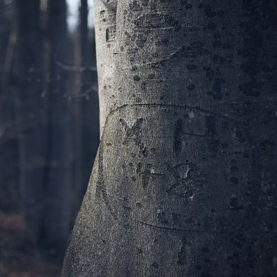 X und H seit 66 Jahren. Was wohl aus ihnen geworden ist? Tree Love Forrest Vscocam