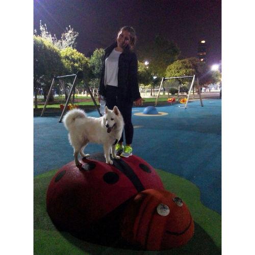 Samoyed Mydog DogLove Sofi Night Caddebostan Istanbul Happy Hanging Out Take Photos
